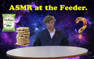 The Sounds and Tastes of the Feeder